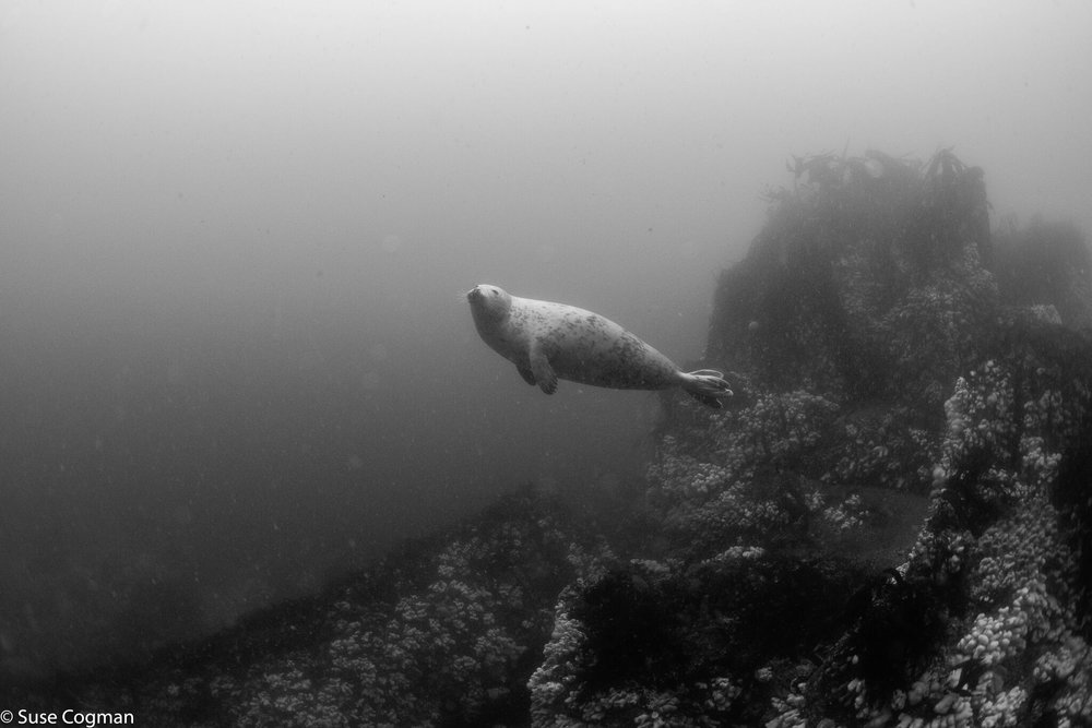 Seal being arty and moody in black and white