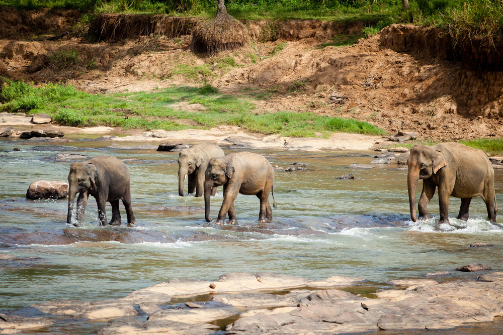Sri Lanka-2514.jpg