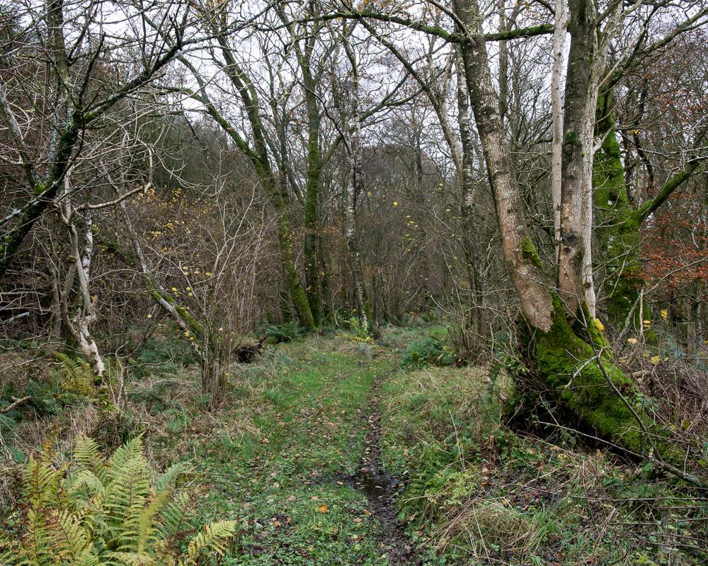 Scots' Dike