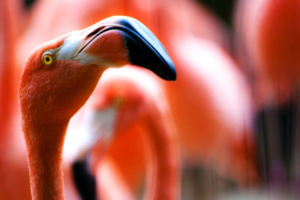 Find out who flocked you - We'll tell you who sent flamingos to your house.