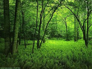 emerald-forest.jpg