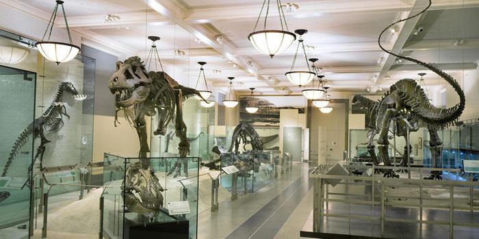 AMNH T. rex Display Photo Credit: amnh.org