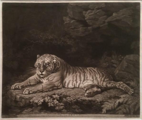 John Dixon A Tigress