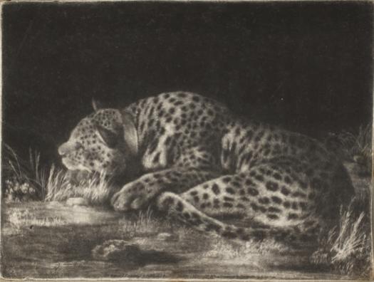 "George Stubbs A Sleeping Cheetah (""A Tyger""), 1788 Mezzotint Princeton University Art Museum"
