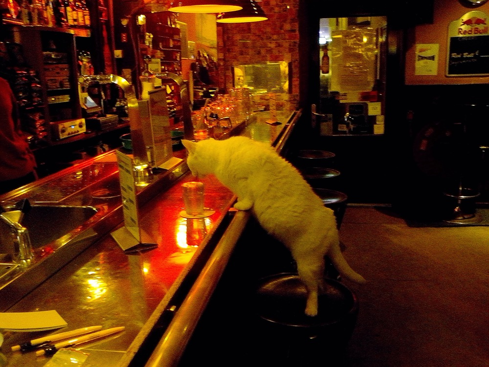 Dutch Cat Living by His Own Means... yes that includes drinking