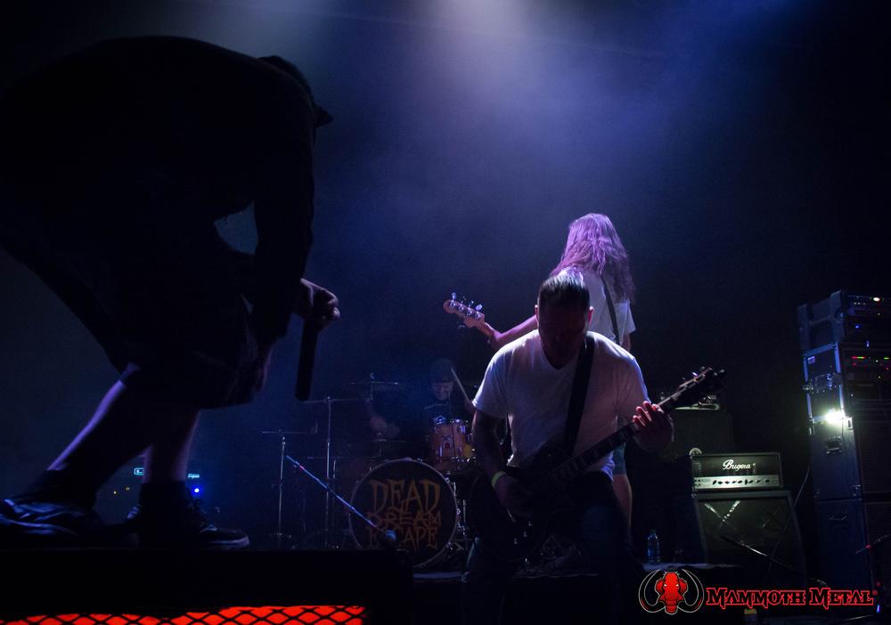 Joey Ramone  photo: David Burke