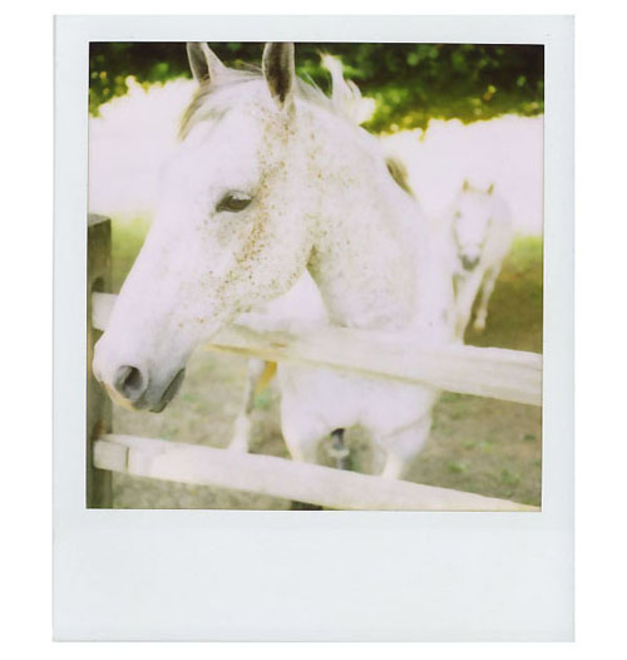 polaroid012.jpeg