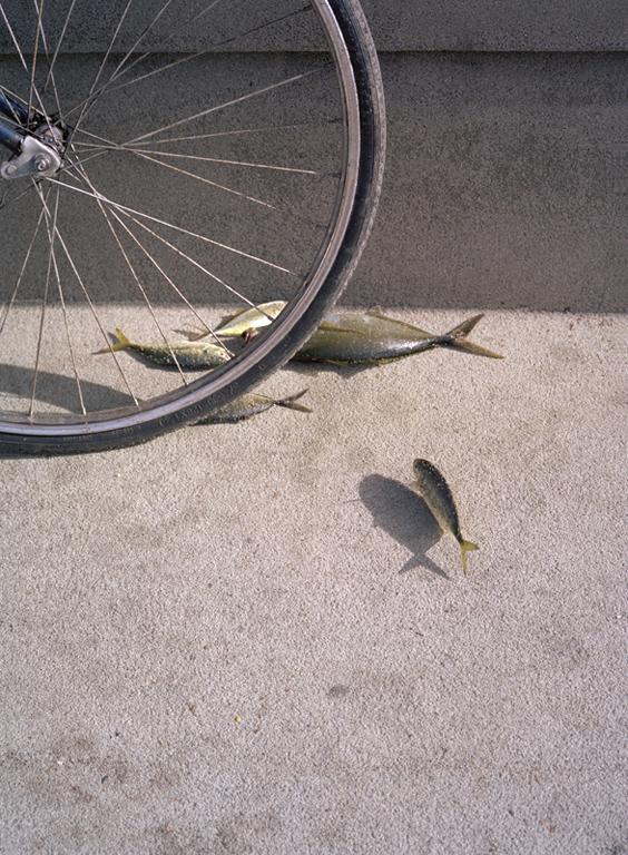 fish bike.jpg