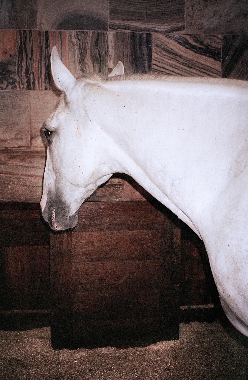 TB_royal_Horse.jpg