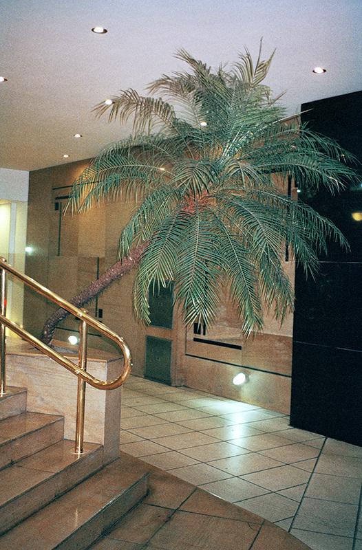 13palm_indoor_526.jpg