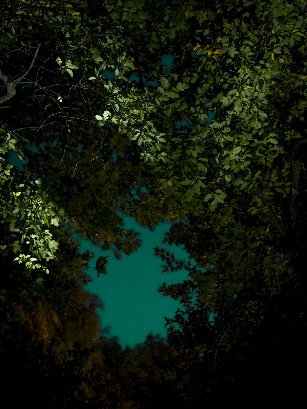 Midnight in the Garden-1.jpg