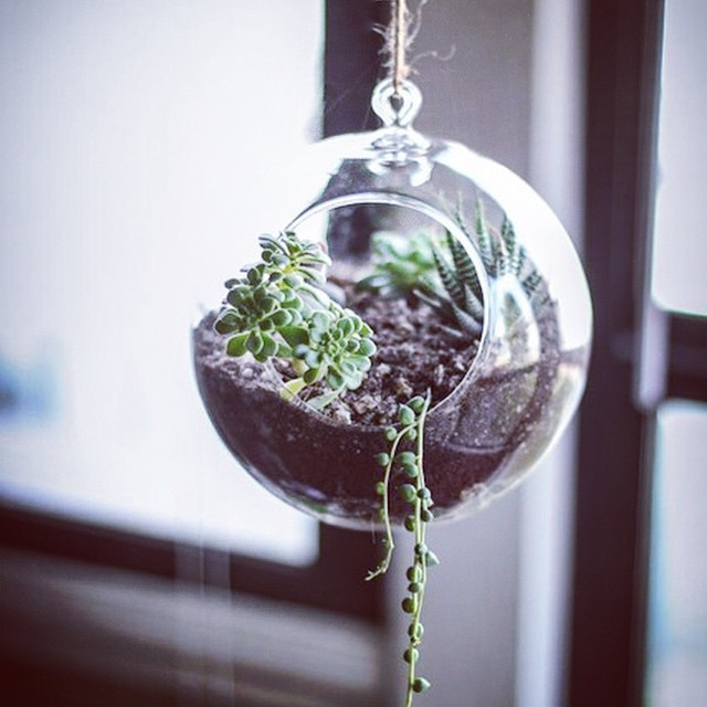 Cute hanging #succulent #garden | #home #design #interiors (at Manhattan, New York)