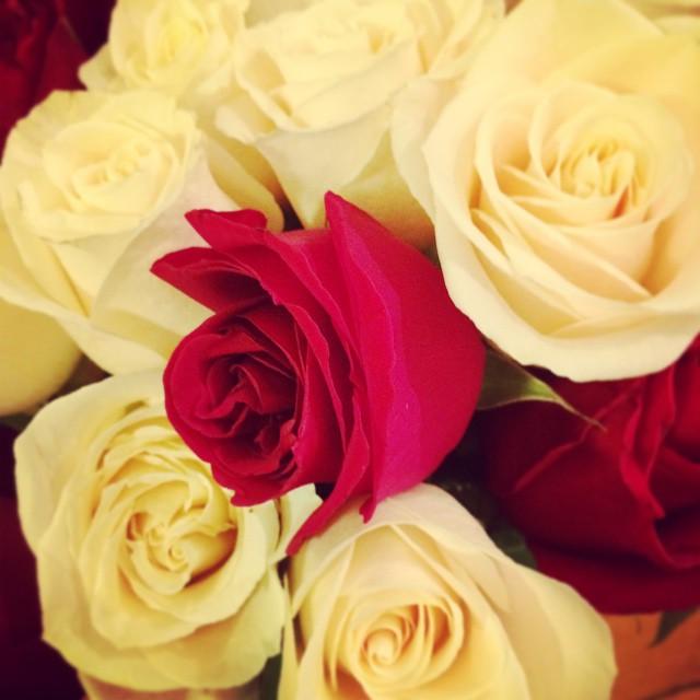 Winter #roses always brighten my day! ✨💗✨ (at Manhattan New York, N Y)