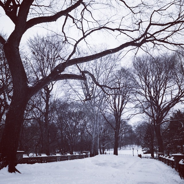 So quiet & beautiful…. #CentralPark #nyc #UES #snow #nature (at Central Park)