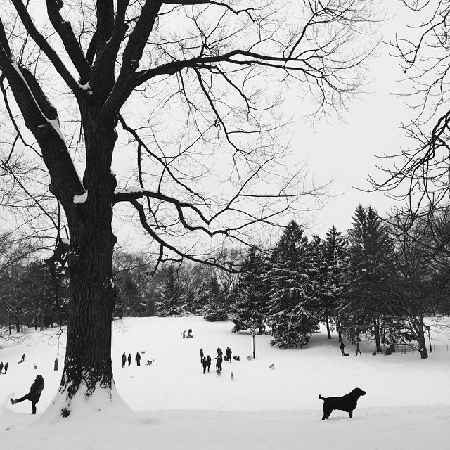 #snow in #CentralPark #NYC #juno #snow2015  (at Central Park)