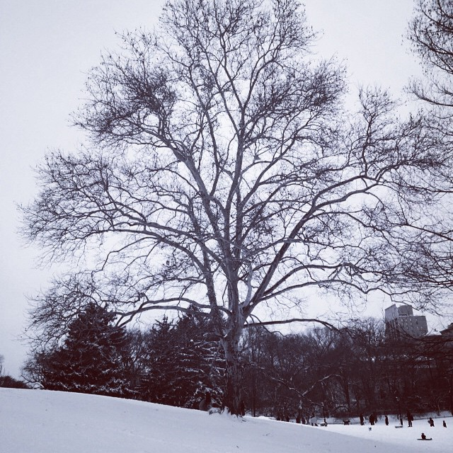 #snowy #centralpark #nyc (at Central Park)