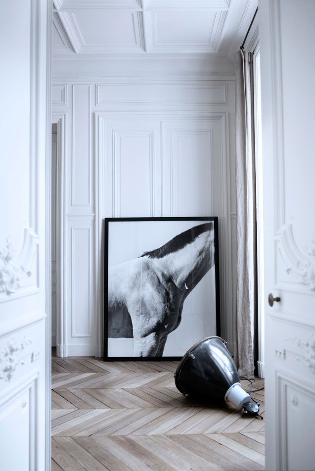 7while23: The House of Gilles & Boissier, Paris Horse Photo by Steven Klein