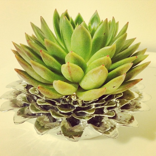 The newest addition to my apt and my first plant in #NYC ! A very special gift :) !! #succulent #nature in the #city (at Manhattan, New York)