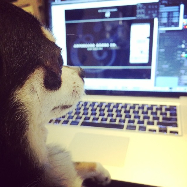 Getting a bit of design direction from #artdirector Diesel! #design #chihuahua #nyc (at New York City, NY)