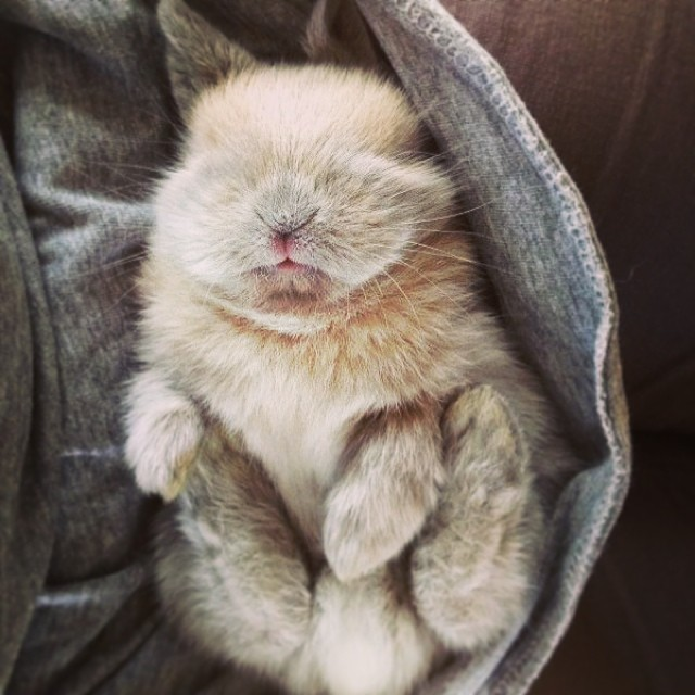 The cutest #bunny ever!