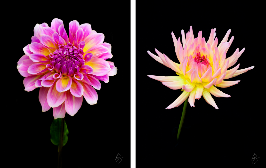 Beautiful floral photography    www.rkjacobs.com