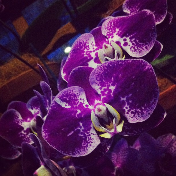 Orchids at Atlanta Botanical Gardens (Taken with Instagram)