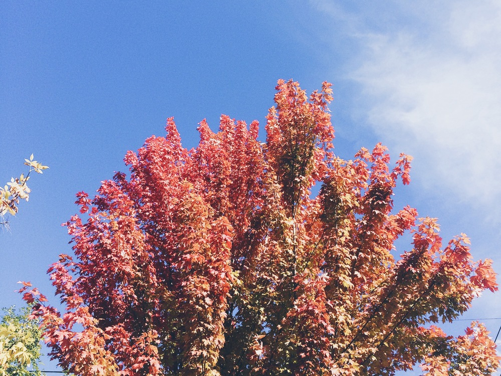 Fall-Color-Portland-We-Perceive.JPG
