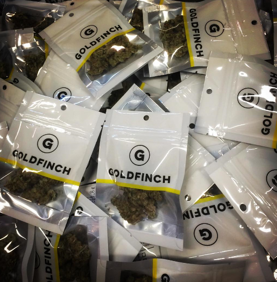 goldfinchweed1.jpg