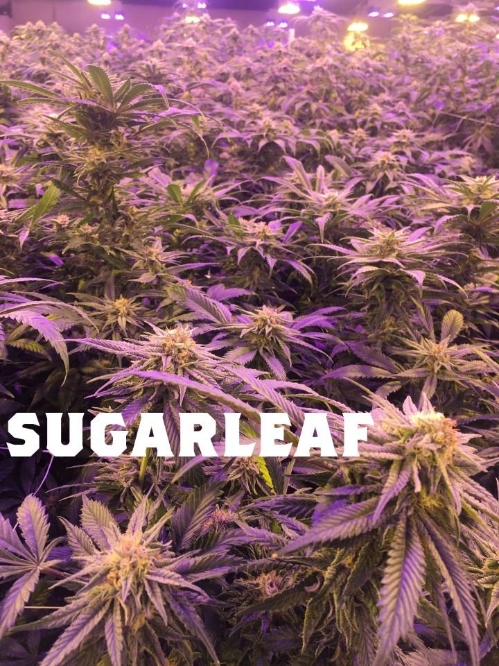 SugarGarden.jpg