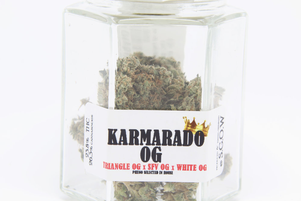 SGOW - Kamarado OG 3.jpg