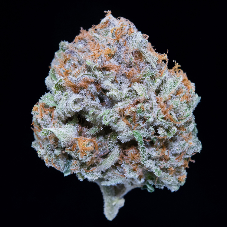 JackHerer - 25% Indica / 75% Sativa