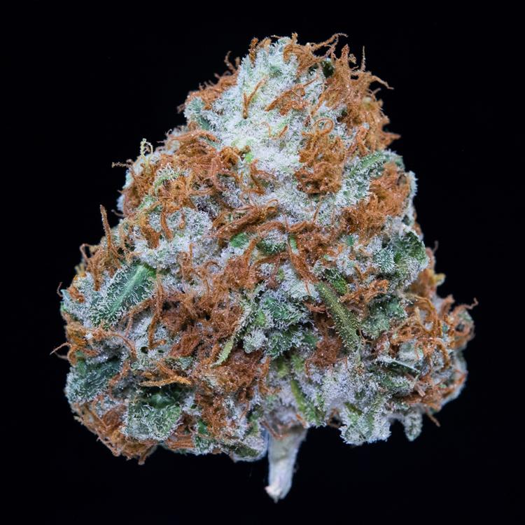 PacificBlue - 80% Indica / 20% Sativa