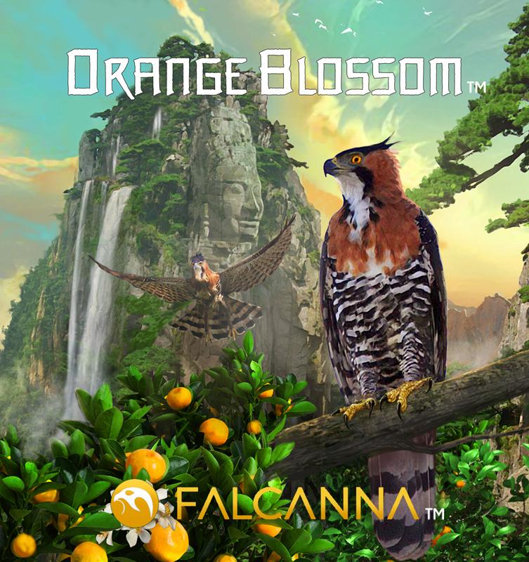 Orange_Blossom_Strain-Art.jpg