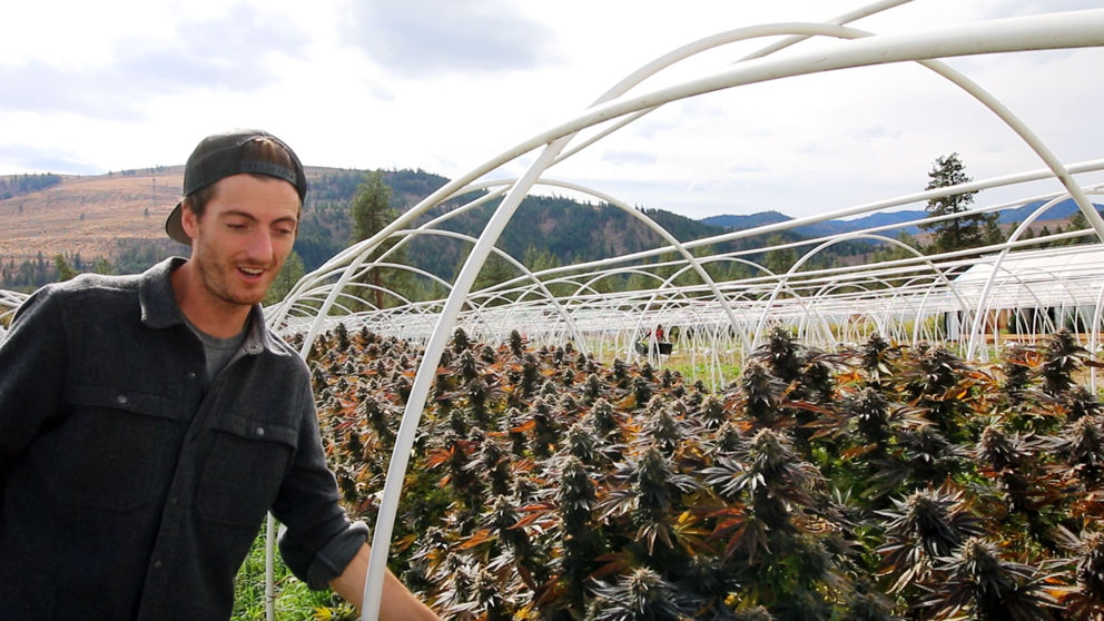 Lazy Bee Garden's founder Matthew is a native of the Methow Valley. His deep knowledge of the unique climate of the valley is evident in every one of his award-winning strains. Cheers, Matthew!