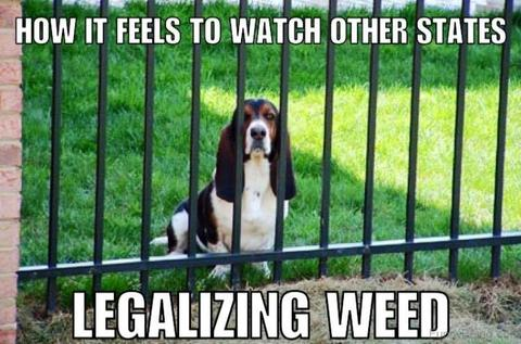 Sad Basset Hound - Move to Washington buddy!via i.pinimg.com/