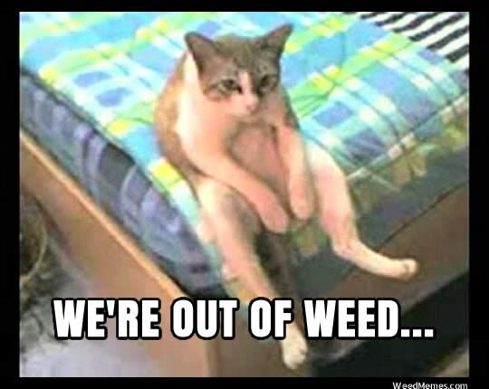 Slouching Kitty - It's a tragedy!via weedmemes.com