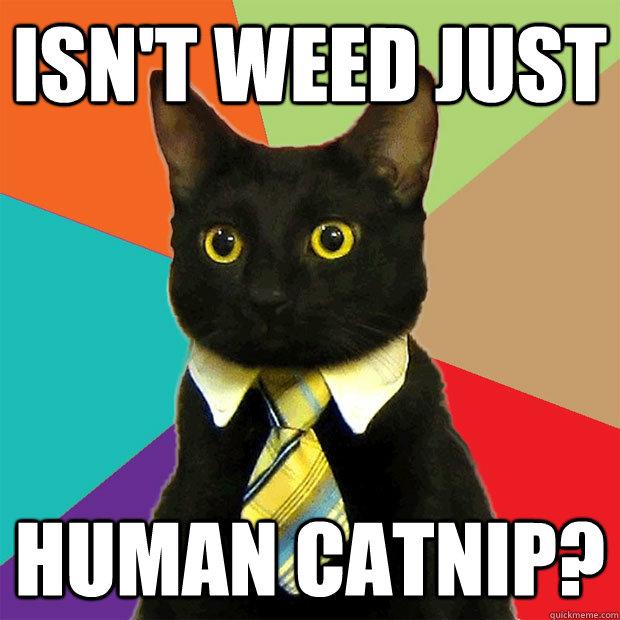 Business Cat - Nice tie!via smoke.io