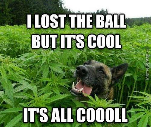 Croptober Shepherd - Let's all be more like this guy.via allthingsdank.com