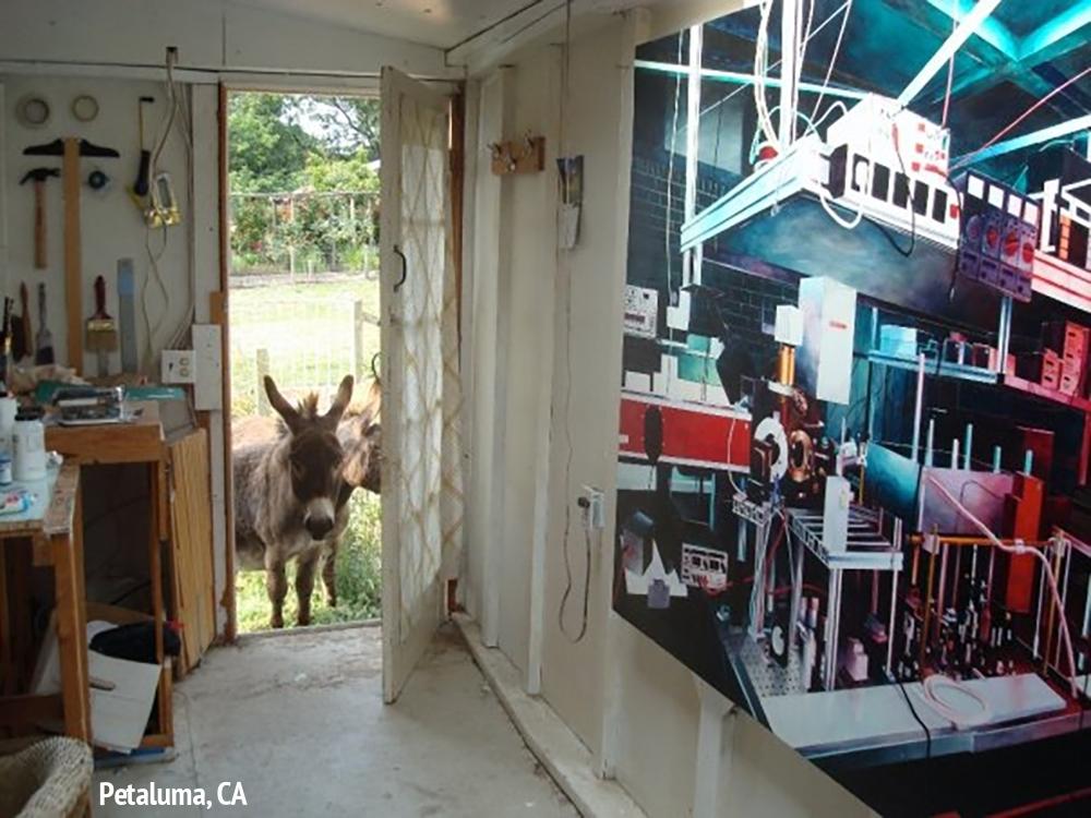 donkey(web).jpg