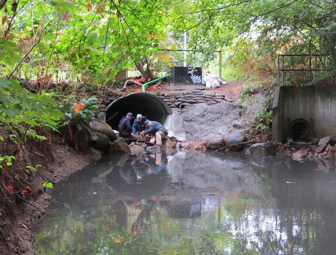 Culvert improvements - October 12th, 2017Duncan, Shane and Gert working at culvert. Chum salmon are in lower Hyde Creek waiting for rains and higher water. Large pool is a resting place for the spawning coho and chum salmon who will continue their journey through the culvert and up to the higher areas of the Hyde Creek watershed to spawn.