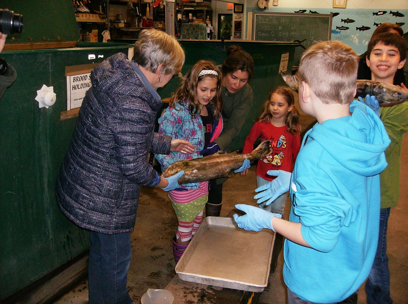 Hatchery Tour - November 26 - Families from Hope Lutheran Church toured the Hatchery
