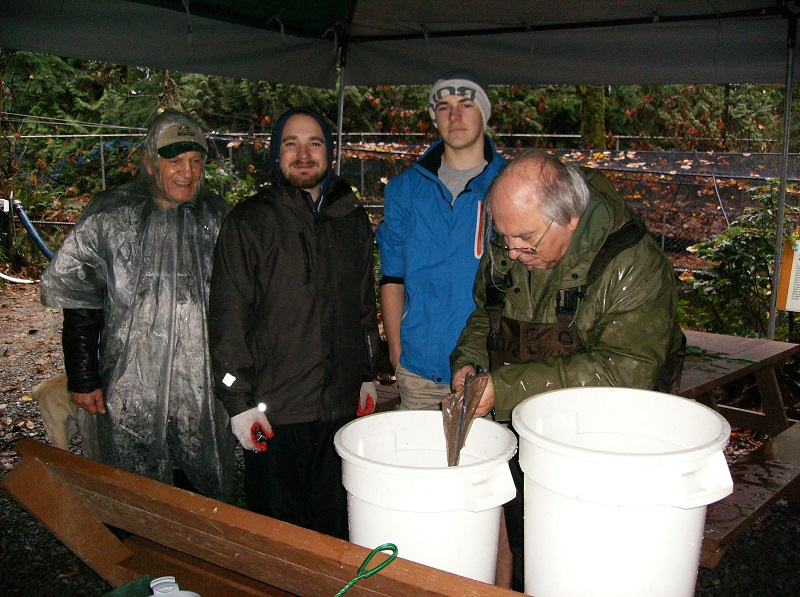 Fish Weigh - December 1, 2017Members weighed a sampling of Coho fry. Average of 9.31 grams. These are salmon eggs from Fall of 2016. Fry reside in the rearing pond until May/June of 2018. Bruno, Duncan, Vlad & Terry. Jasmine & Duncan photo 2