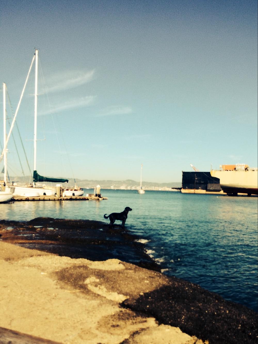 Pier66SFPublicShore2.JPG