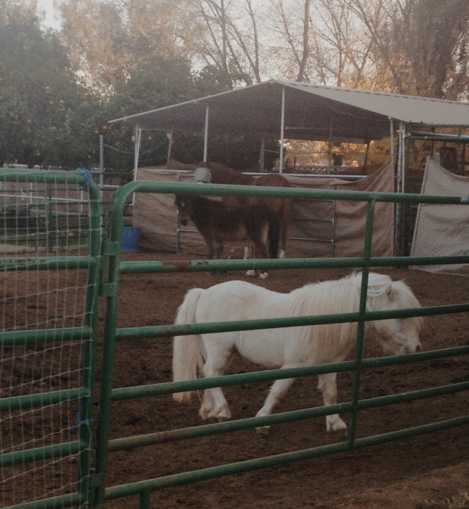 Ponies and a horse