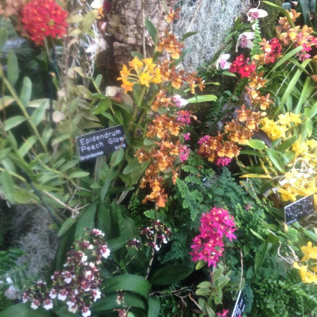 BG flowers