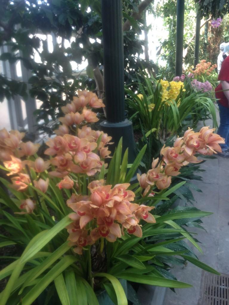 BG row of flowers