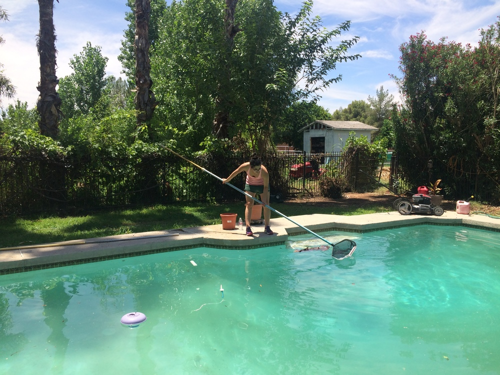 My sister cleaning our pool in the 'burbs.