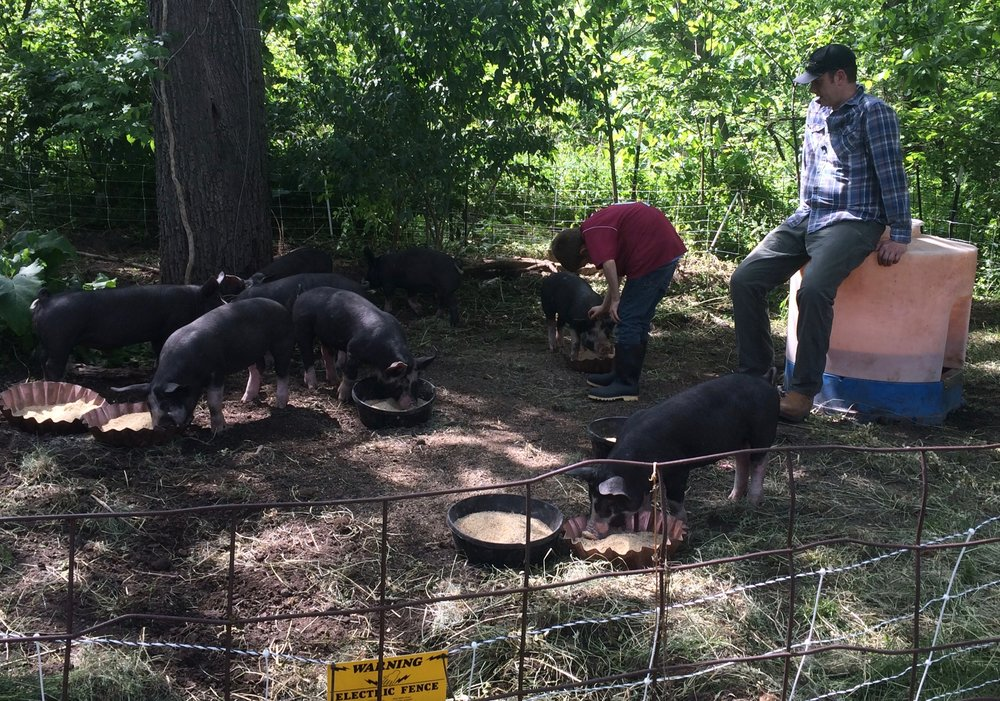 Beckett and Josh hanging out with the pigs.  Josh is sitting on the waterer (chief of all he surveys) and Beckett is petting a pig.