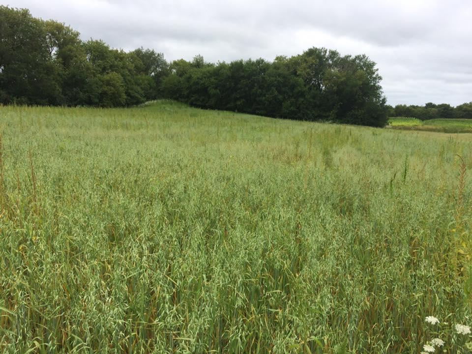 Healthy pasture 2017.jpg