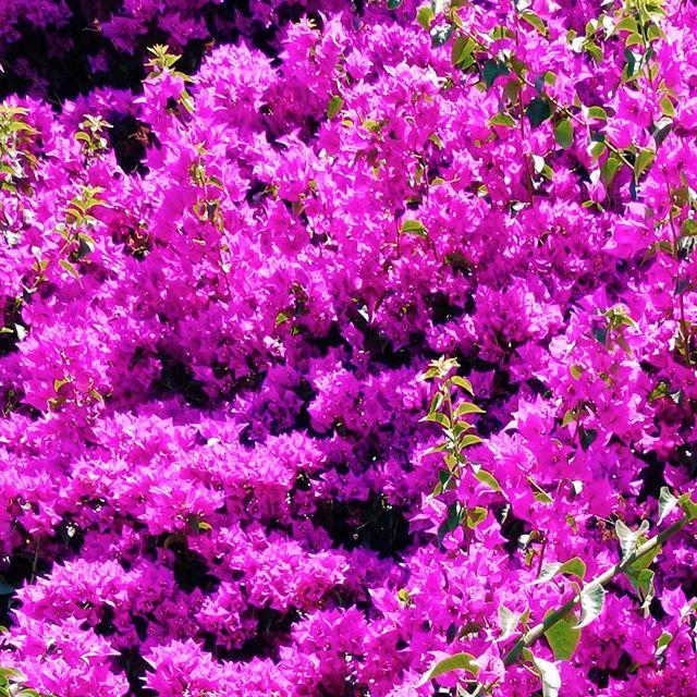 Floral-esque Cinque Terre 🌺